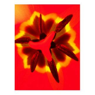 Centre rouge de tulipe cartes postales