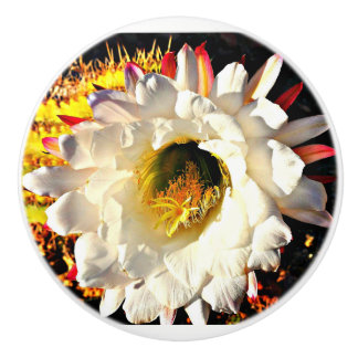 Ceramic Knob - White Cactus Flower