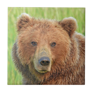 Ceramic Tile of grizzly bear