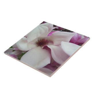 Ceramic Tile - Saucer Magnolia Bloom