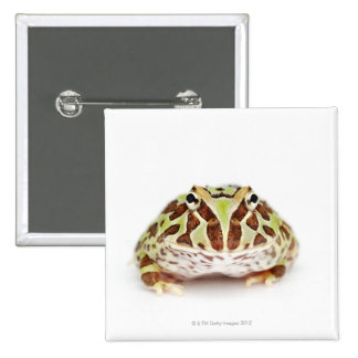 Ceratophrys Cranwelli, Cranwell's Horned Frog, 2 Inch Square Button