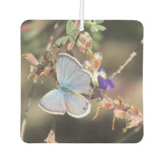 Ceraunus Blue Butterfly Car Air Freshener