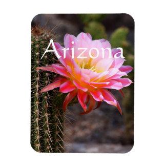 Cereus in pink, Arizona Magnet