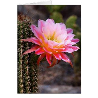 Cereus in pink card