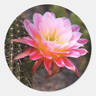 Cereus in pink sticker