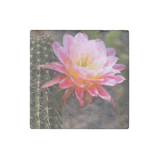Cereus in pink stone magnets