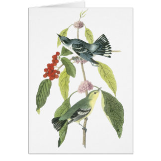 Cerulean Warbler, John Audubon Card