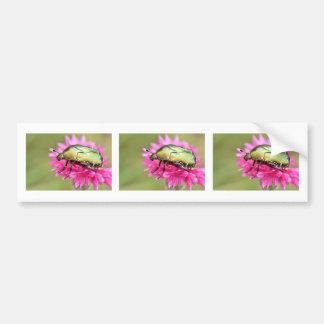 Cetonia beetle on pink flower bumper sticker