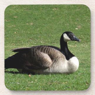 CGR Canada Goose Resting Drink Coasters