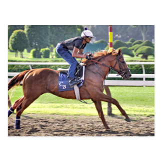 Chad Brown Workouts during Saratoga 150 Postcard