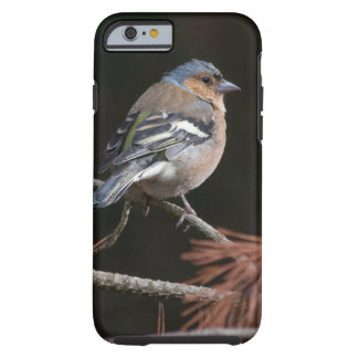 Chaffinch Tough iPhone 6 Case