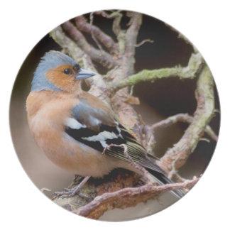 Chaffinch Wildlife bird photograph party plate