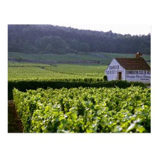 Chambertin Clos de Beze Grand Cru vineyard with Postcard