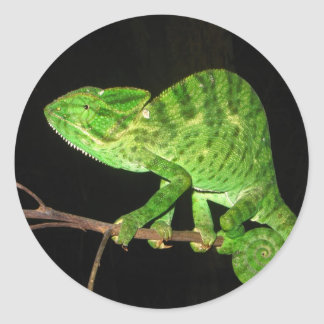 Chameleon (Chamaeleo zeylanicus) Round Sticker