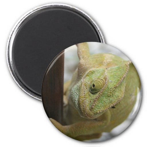 Chameleon: Fifty Shades of Green Magnets