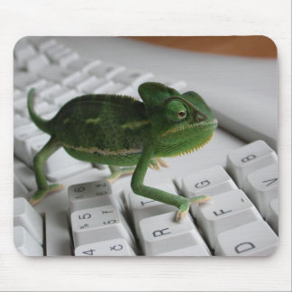 Chameleon on Keyboard Mouse Pad