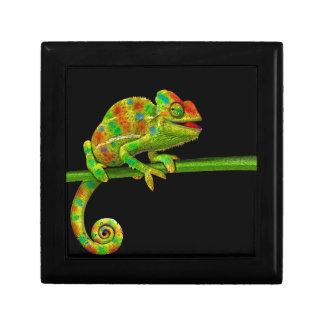 Chameleons Gift Box