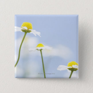 Chamomile 2 Inch Square Button