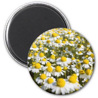 Chamomile Field, Hungary 2 Inch Round Magnet