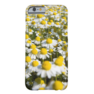 Chamomile Field, Hungary Barely There iPhone 6 Case