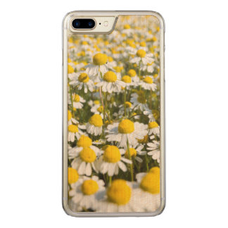 Chamomile Field, Hungary Carved iPhone 7 Plus Case