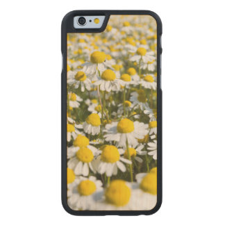 Chamomile Field, Hungary Carved® Maple iPhone 6 Case