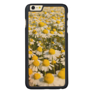 Chamomile Field, Hungary Carved® Maple iPhone 6 Plus Case