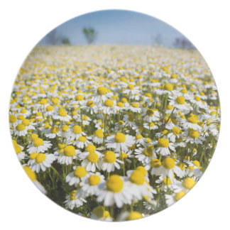 Chamomile Field, Hungary Dinner Plates