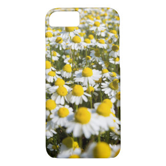 Chamomile Field, Hungary iPhone 7 Case