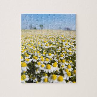 Chamomile Field, Hungary Jigsaw Puzzle