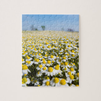 Chamomile Field, Hungary Puzzles