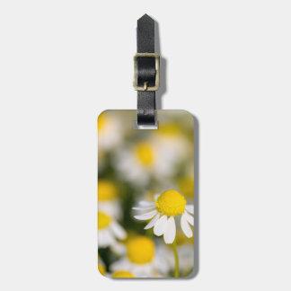 Chamomile flower close-up, Hungary Bag Tag