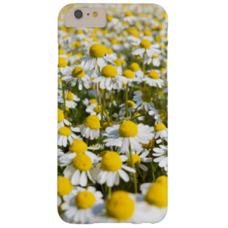 Chamomile flower close-up, Hungary Barely There iPhone 6 Plus Case