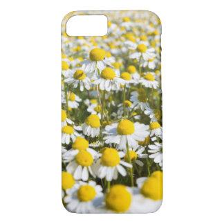 Chamomile flower close-up, Hungary iPhone 8/7 Case