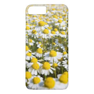 Chamomile flower close-up, Hungary iPhone 8 Plus/7 Plus Case