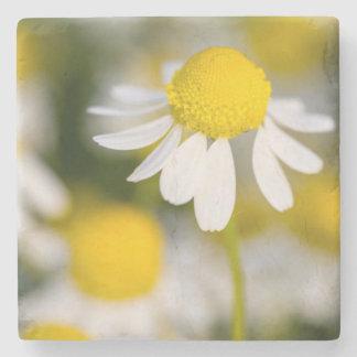 Chamomile flower close-up, Hungary Stone Coaster