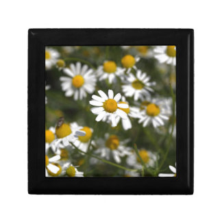 Chamomile flowers keepsake boxes