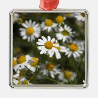 Chamomile flowers Silver-Colored square ornament