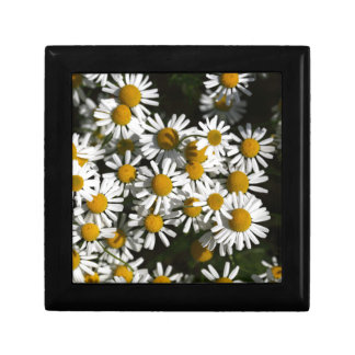 Chamomile flowers trinket box