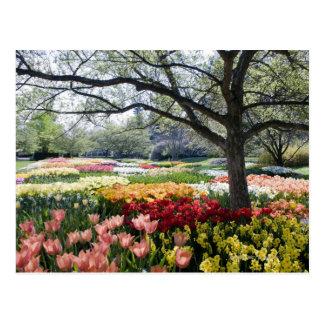 Champ des fleurs un matin de ressort carte postale