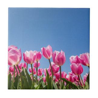 Champ rose de tulipes avec le ciel bleu petit carreau carré