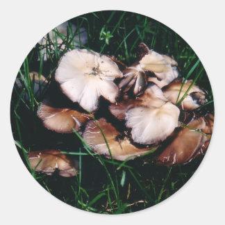 Champignons dans des autocollants d'herbe