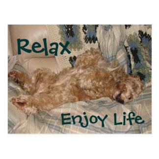 Chance Relax Postcard