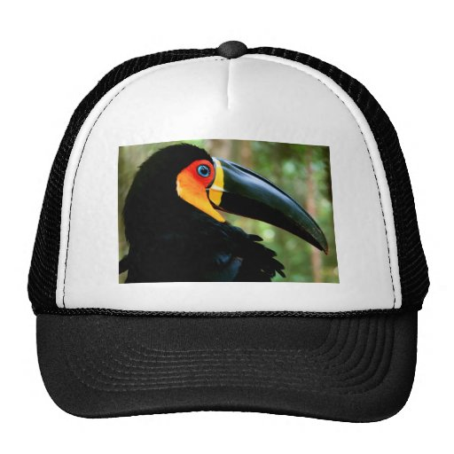 Channel-billed Toucan. Mesh Hat