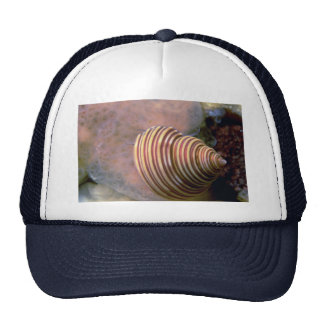 Channeled top shell Shell Mesh Hat