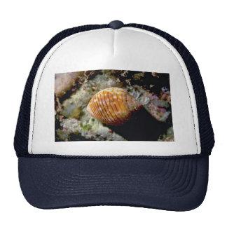 Channeled tun (Tonna cepa) Shell Mesh Hat