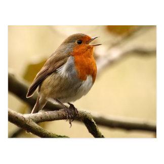 Chant Robin Cartes Postales