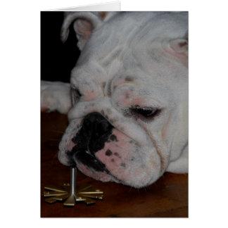 Chanukah dreidel bulldog card
