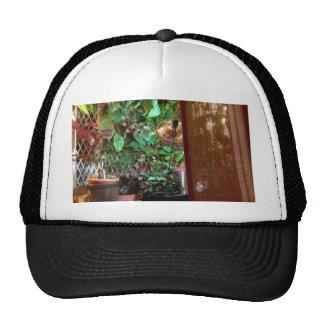 Chapeau avec la photo d'intérieur de nature casquettes de camionneur