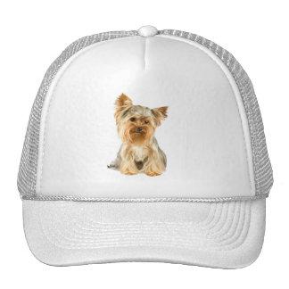 Chapeau mignon de photo de chien de Yorkshire Terr Casquettes